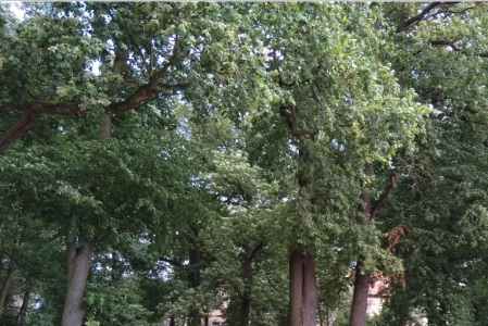 Kozi Park zyska nowe drzewa! :)